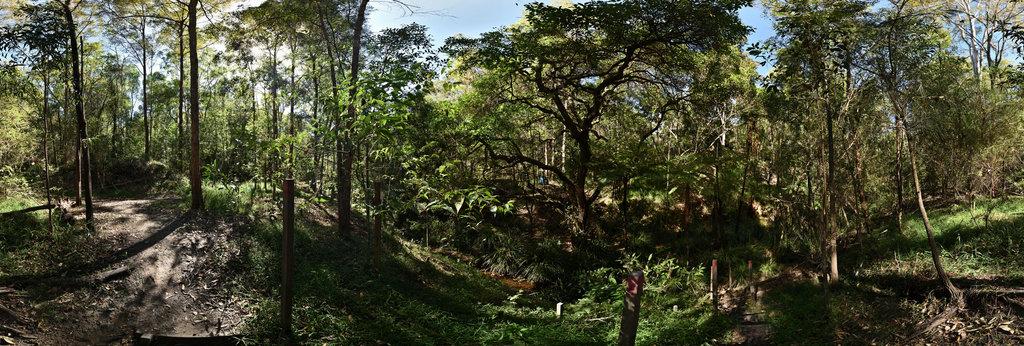 Steps to Perrin Creek - Seven Hills Bushland Rehabilitation Group  360 Panorama